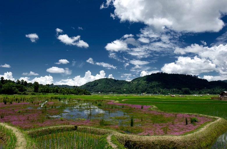 Apatani Cultural Landscape, Arunachal Pradesh