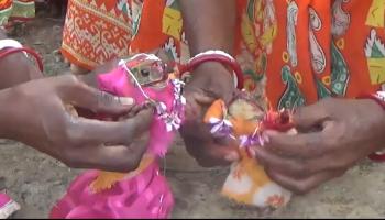 Watch: Tripura tea garden workers get frogs married to please rain gods