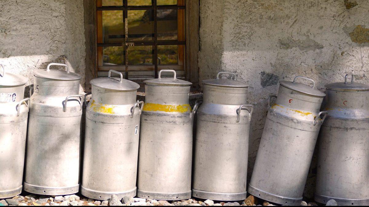 Prepare schemes to boost milk, pork, poultry production: Assam CM