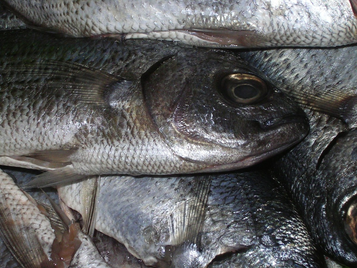Watch: A quintal of dead fish in Guwahati's Dighalipukhuri raises stink
