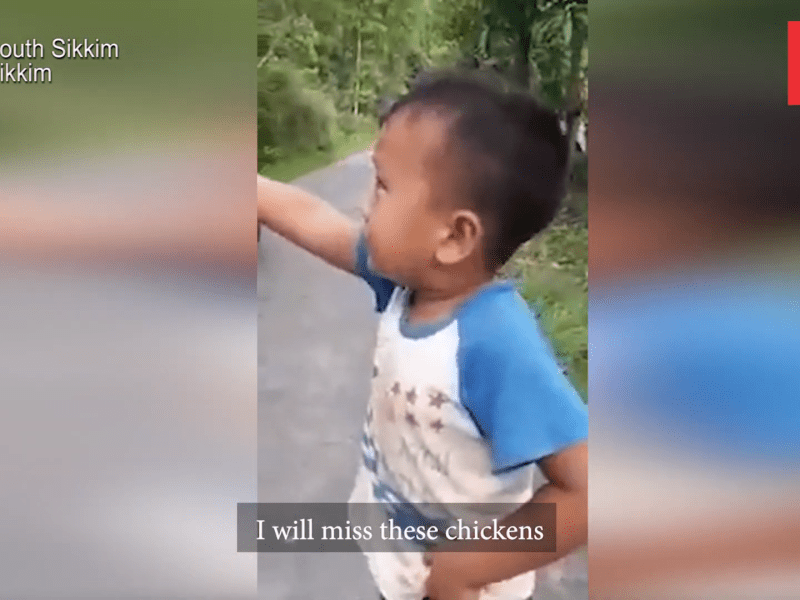Watch: 6-year old boy's reaction to his chicken being taken for slaughter