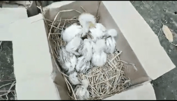 Assam: 3 arrested in connection with death of over 200 egrets at Tangla