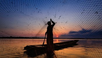Assam's fish production rises over 33% in 4 years: Official
