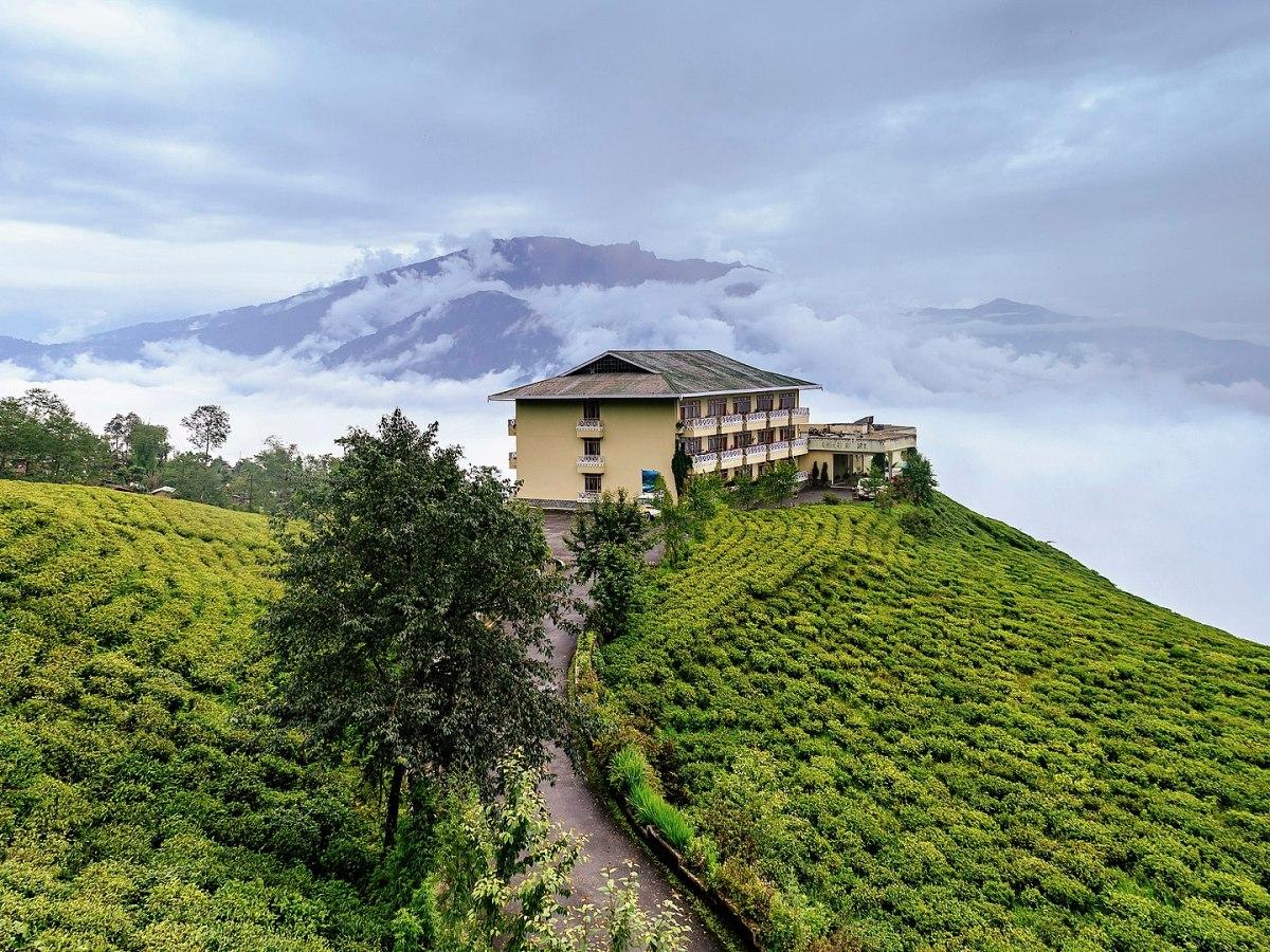 Temi Tea Garden, Namchi, Sikkim