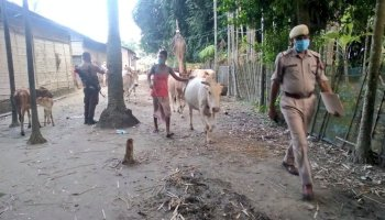 Assam: Cattle smuggler shot, injured while 'fleeing' police custody in Dibrugarh