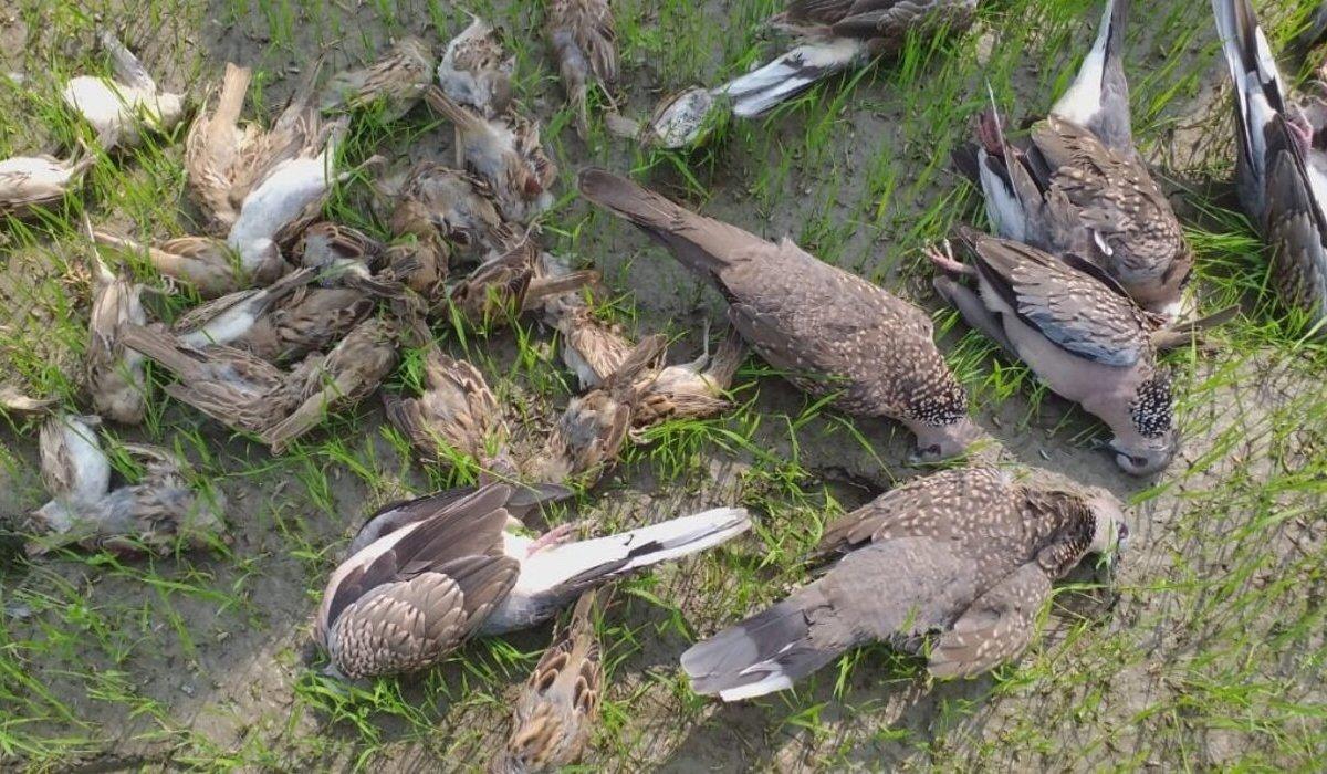 Assam orders probe into death of scores of birds in Barpeta