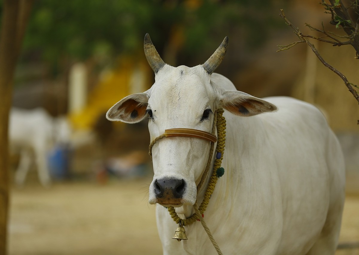 Assam Assembly passes cattle bill as Opposition stages walkout