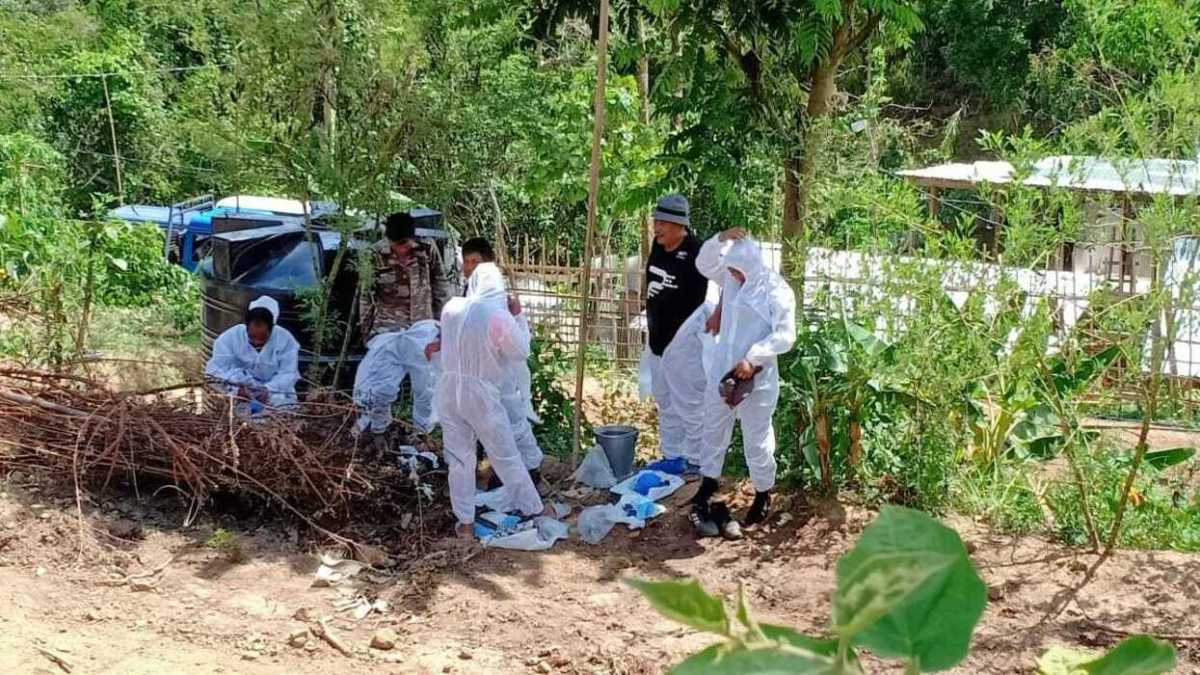 Mizoram: 25,000 pigs die of African Swine Fever in 5 months, causing Rs 121 cr loss