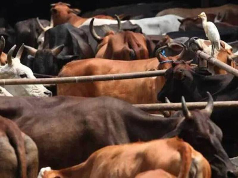 Meghalaya: State to write to Assam govt over Section 7 of Assam Cattle Bill