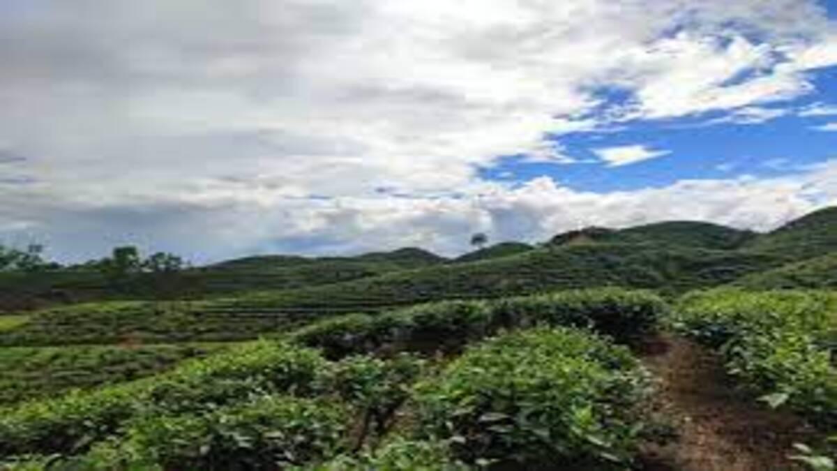 Assam: Curfew clamped in Serispore Tea Garden, three villages after group clashes