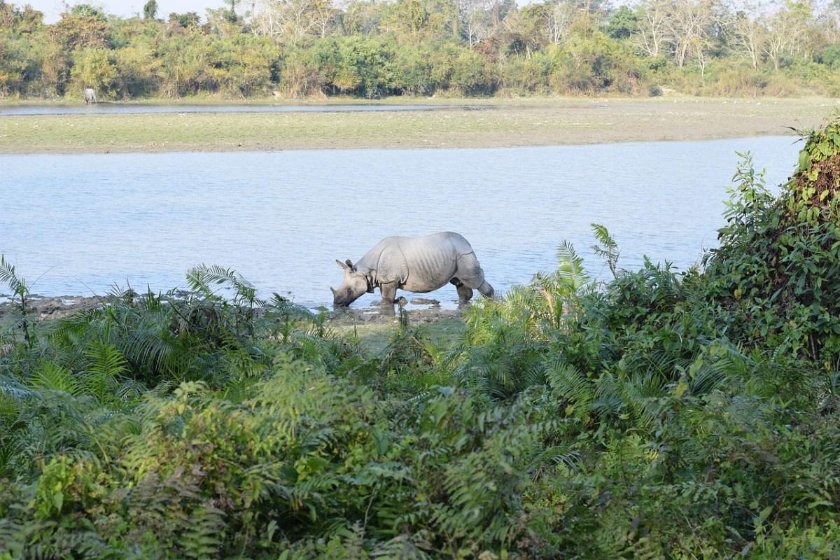 Forest guard suicide Kaziranga national park