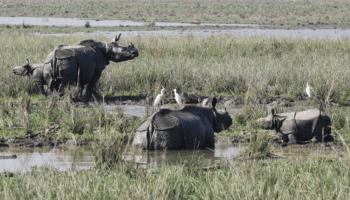 Assam's Pobitora Wildlife Sanctuary reopens for tourists