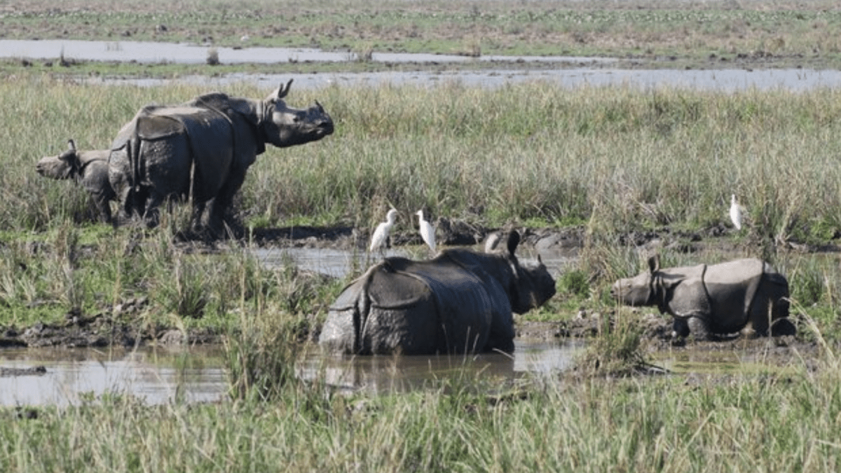 Assam's Pobitora Wildlife Sanctuary to reopen for tourists from October 15