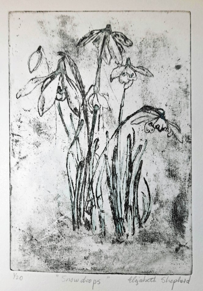 Snowdrops etching 15x22cms £50
