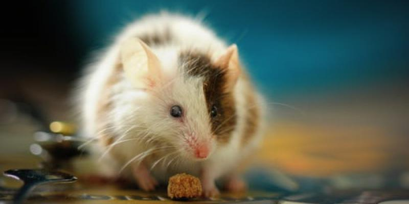 Hantavirus Reports Surface Nationwide | Eastside Exterminators