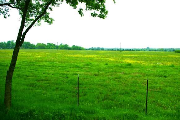 42-8-paris-texas-meadow-pond-field