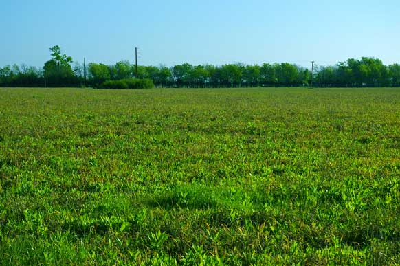 42-8-paris-texas-meadow-pond-trees