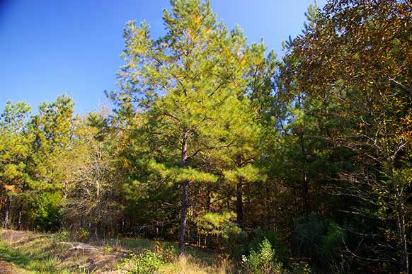 upshur-county-tx-homesite-8-1-pines