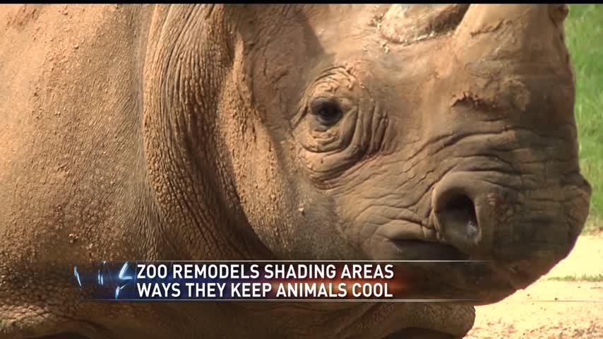 rhino exhibit_72115451-159532