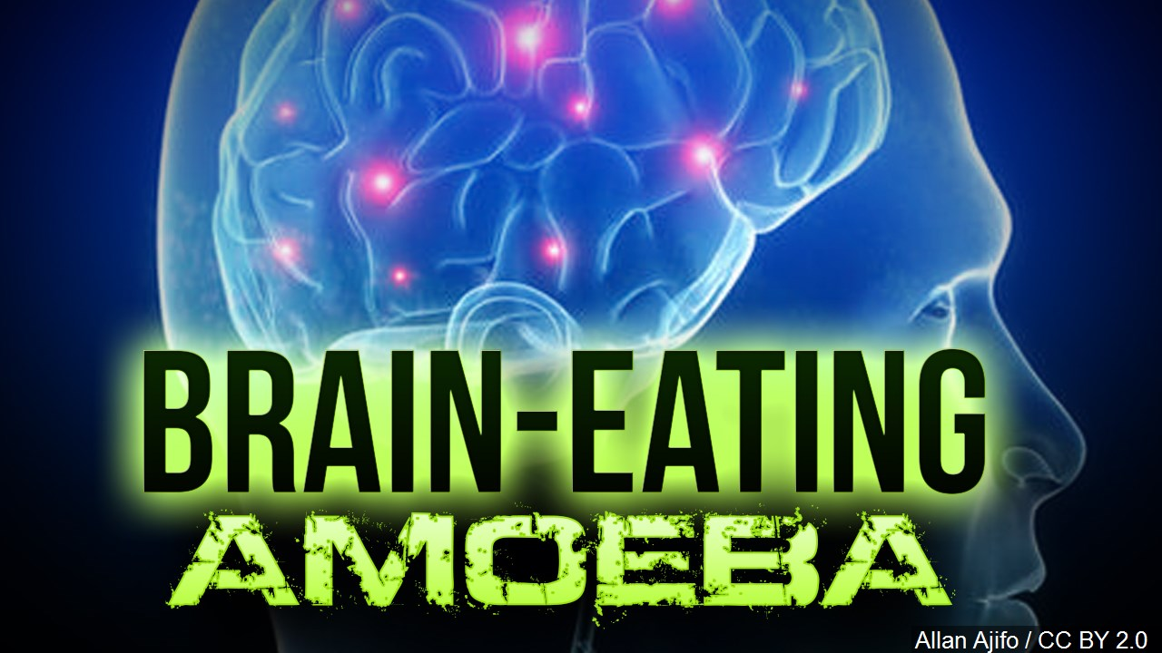 brain eating amoeba_1473904169180.jpg