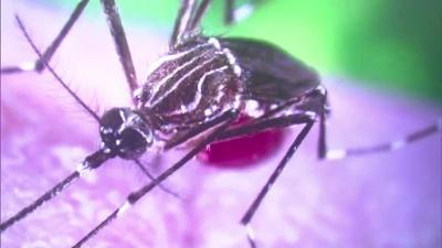 Zika-mosquito_20161014160417-159532