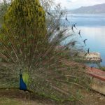 sveti naum ohridsko jezero