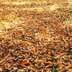 CCNA hears about leaf pickup options, city audit, Mott CC millage