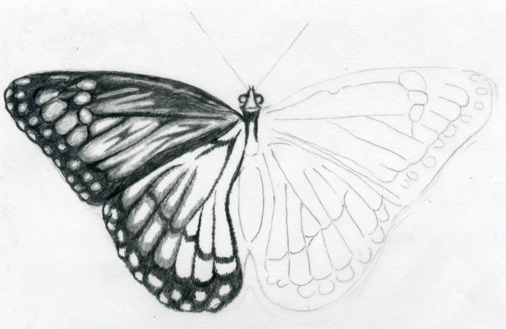Butterfly Drawings