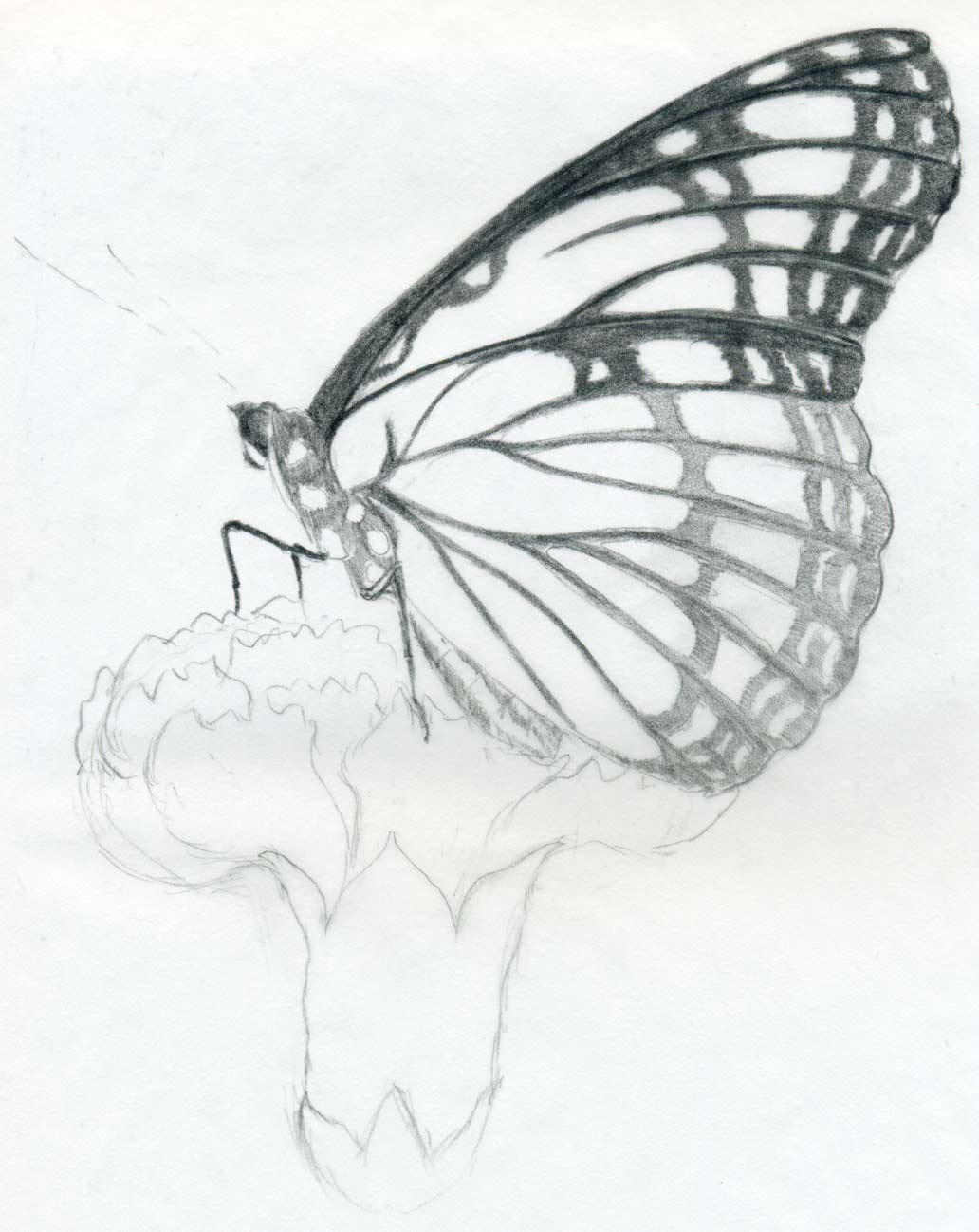 Easy Pencil Drawings Butterflies