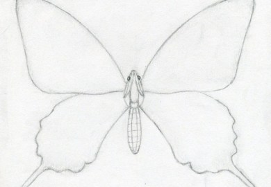 Butterfly Drawing Easy Methods How To Draw Butterflies