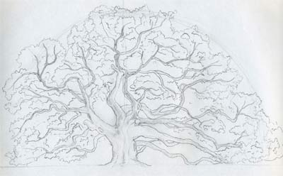 Draw An Oak Tree. Angel Oak Tree.