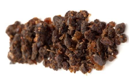 commiphora mukul - Indian bdellium