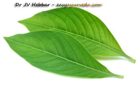 Vasaka leaf