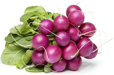 purple radish