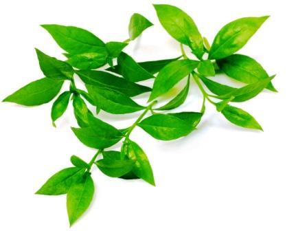Mehndi leaves