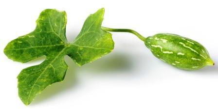 Ivy gourd leaf with fruit