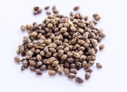dry Papaya seeds