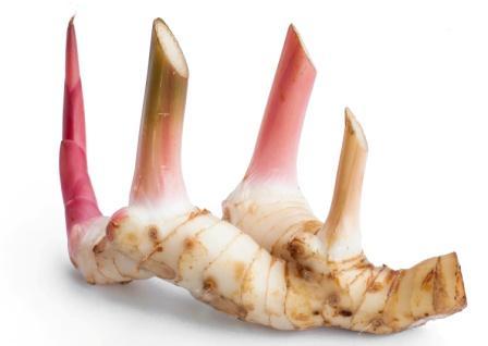 Alpinia galanga rhizome