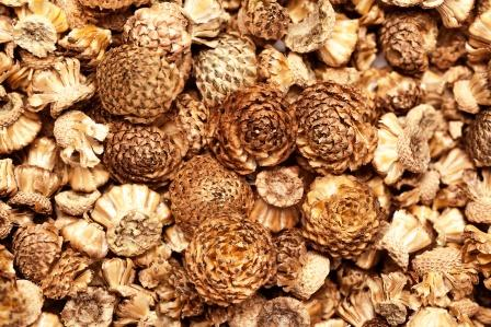 akarkara seeds