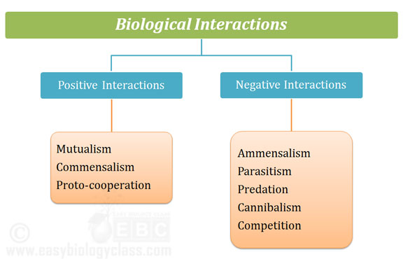 Interactions In An Ecosystem PPT Example Easybiologyclass