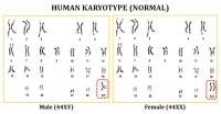 Karyotypes Worksheet Free Worksheets Library | Download ...