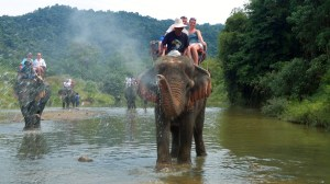 Elefantenreiten & Baden Ausflug