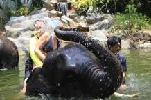 Elephant Bathing - Khao Lak