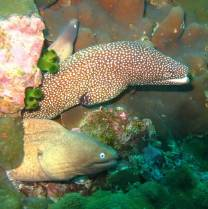 Tolles Schnorcheln in den Koh Surin Inseln