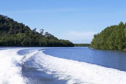 Paradise Kam Island Tour - Mangroves