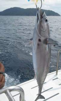 Phuket Game Fishing Charter - Catch