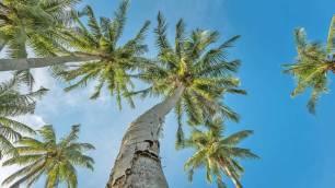 Palm Trees - Racha Island Day Trip