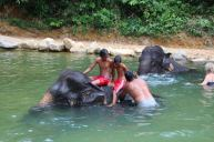 Elephant Bathing - Kapong Safari Tour