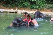 Elefanten Camp