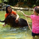 Phuket Tours into Phang Nga - Baby Elephant Bathing in Kapong